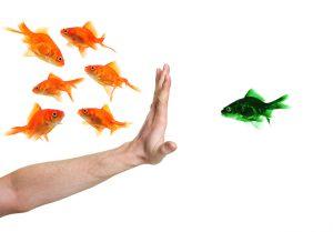 hand discriminating green goldfish